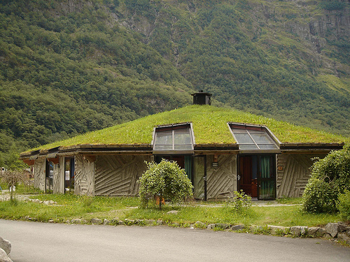 Grass on Roof